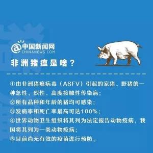 温州乐清发生非洲猪瘟疫情!这病是啥?传染人吗?